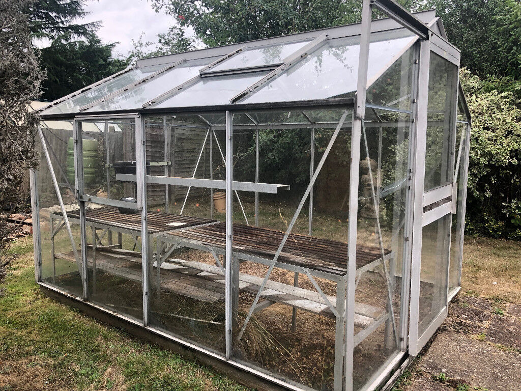 Greenhouse, Including Greenhouse Staging Shelves And Internal Water System  | In Ashtead, Surrey | Gumtree