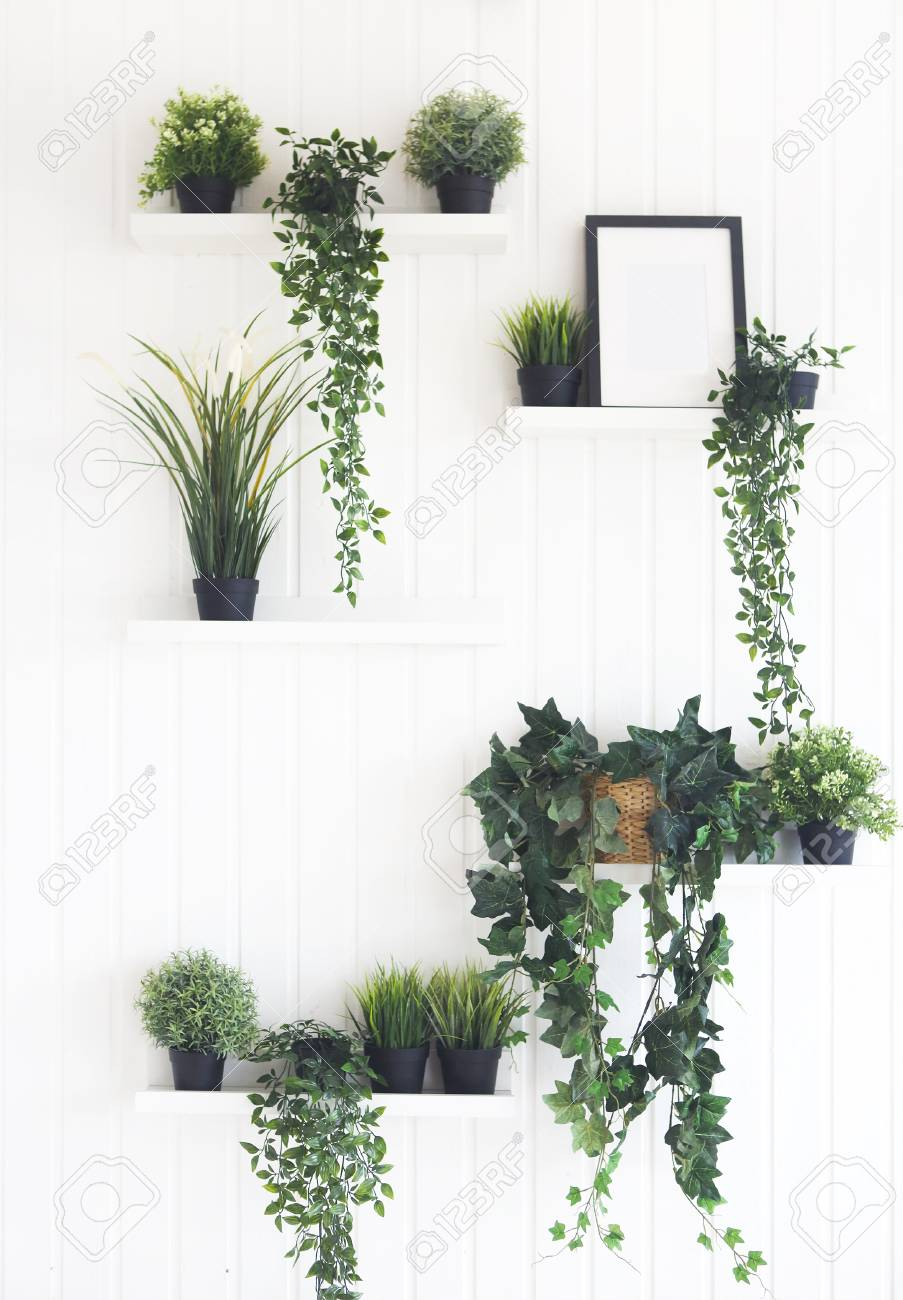 Green Plants On White Shelves On White Wall In The Room
