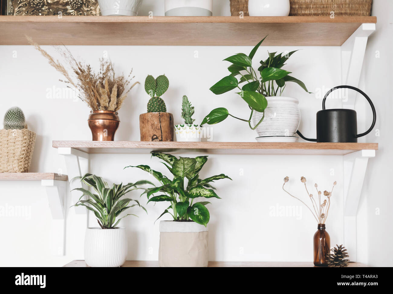 Stylish Wooden Shelves With Green Plants, Black Watering Can, Boho