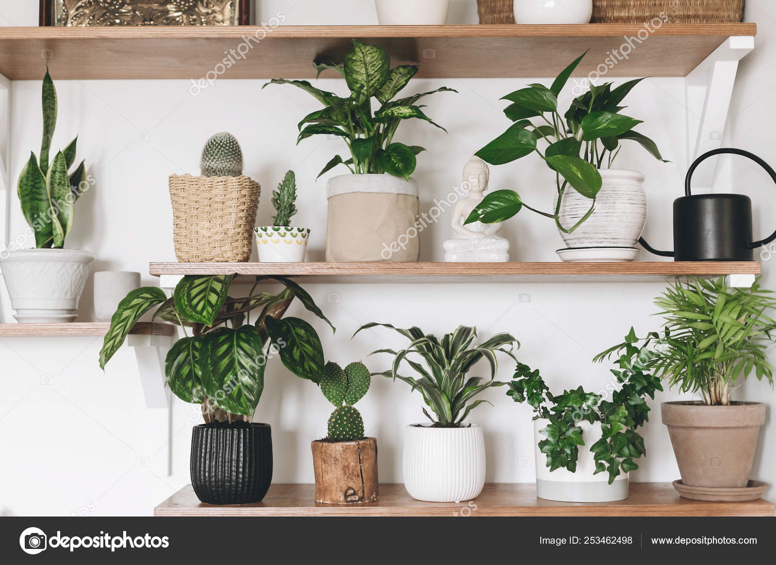 Stylish Wooden Shelves With Green Plants And Black Watering Can