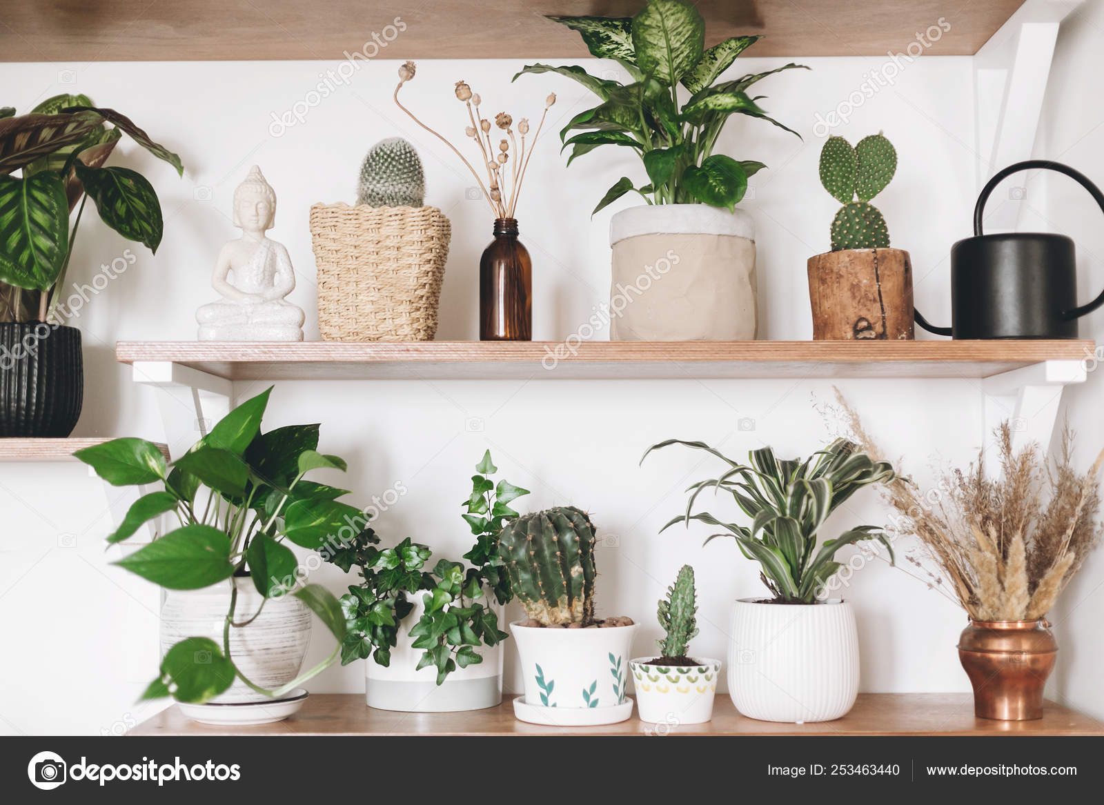 Stylish Wooden Shelves With Green Plants, Black Watering Can, Wi