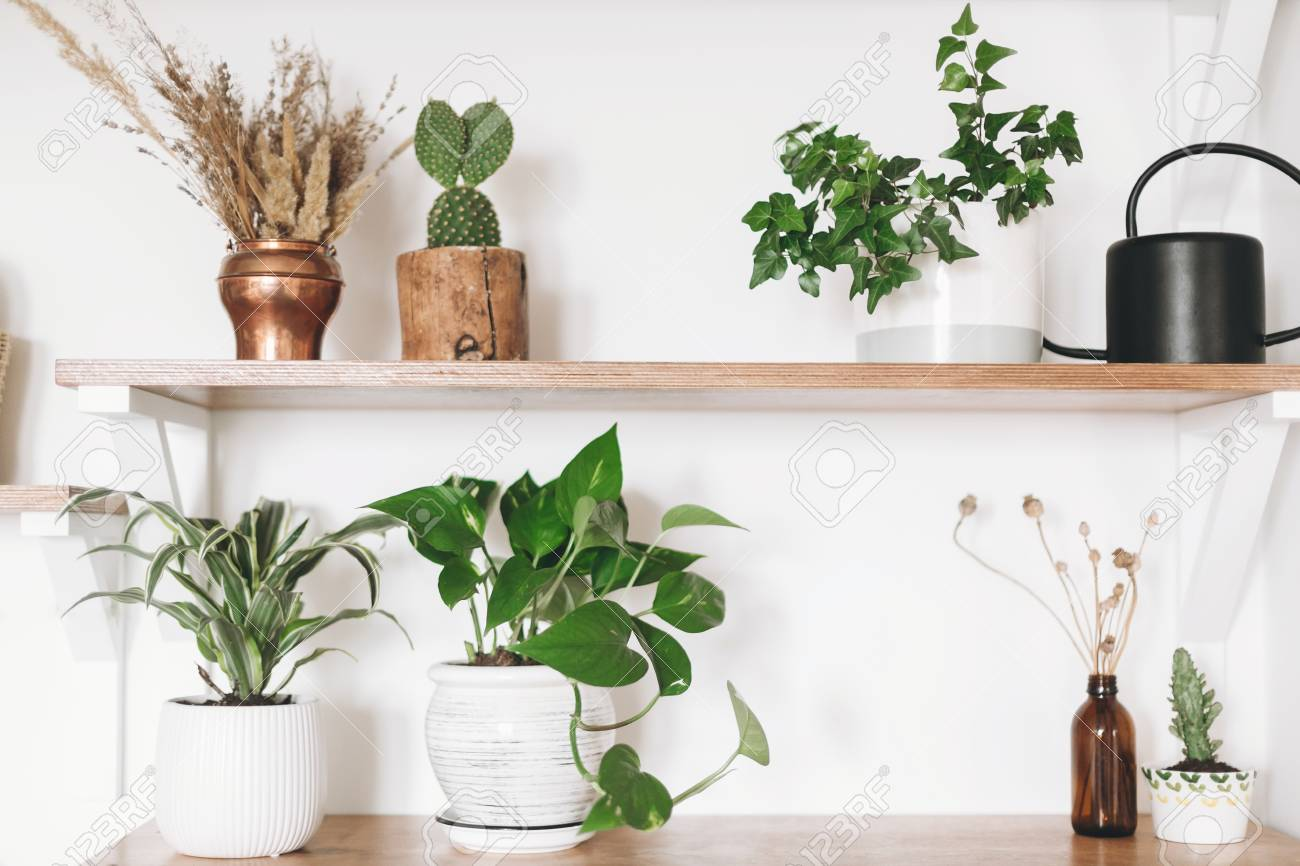 Stylish Wooden Shelves With Green Plants, Black Watering Can
