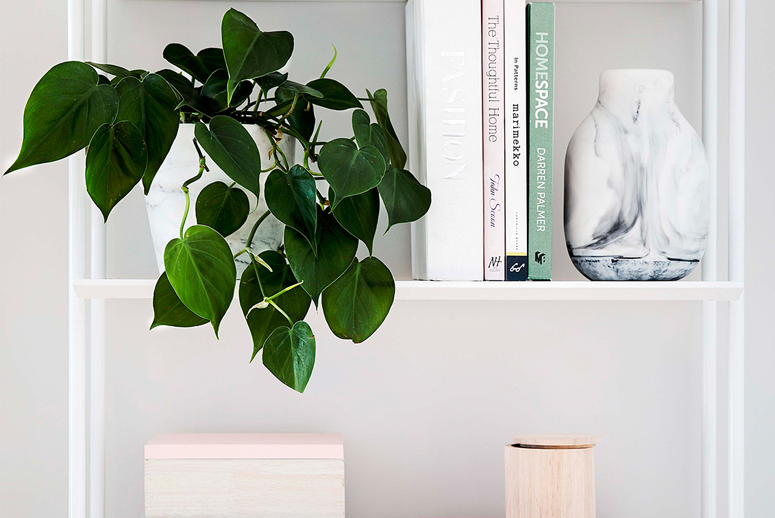 10 Ways To Decorate With Plants On Shelves   Home Beautiful