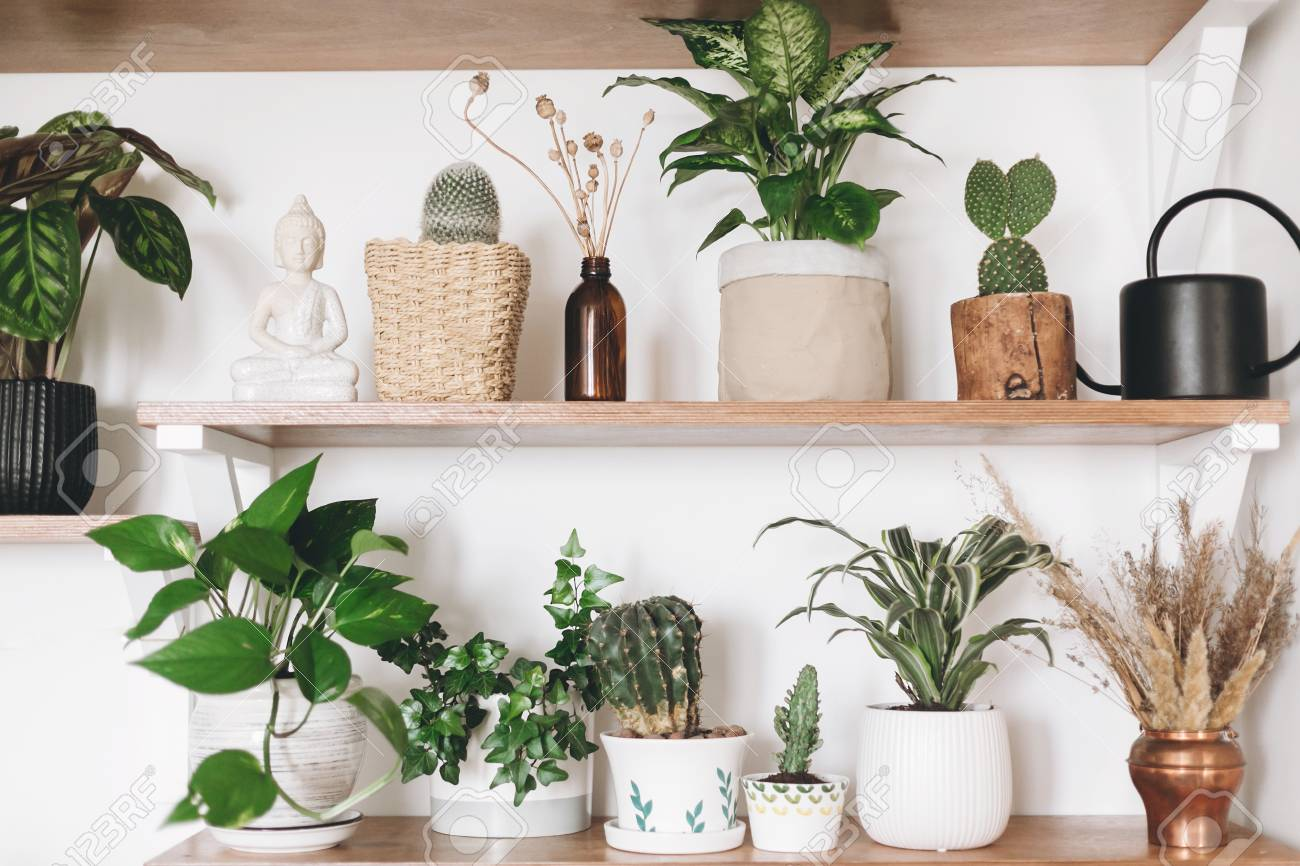 Stylish Wooden Shelves With Green Plants, Black Watering Can,