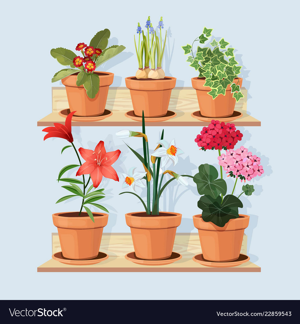 Flowers At Shelves Decorative Tree Plants Grow In