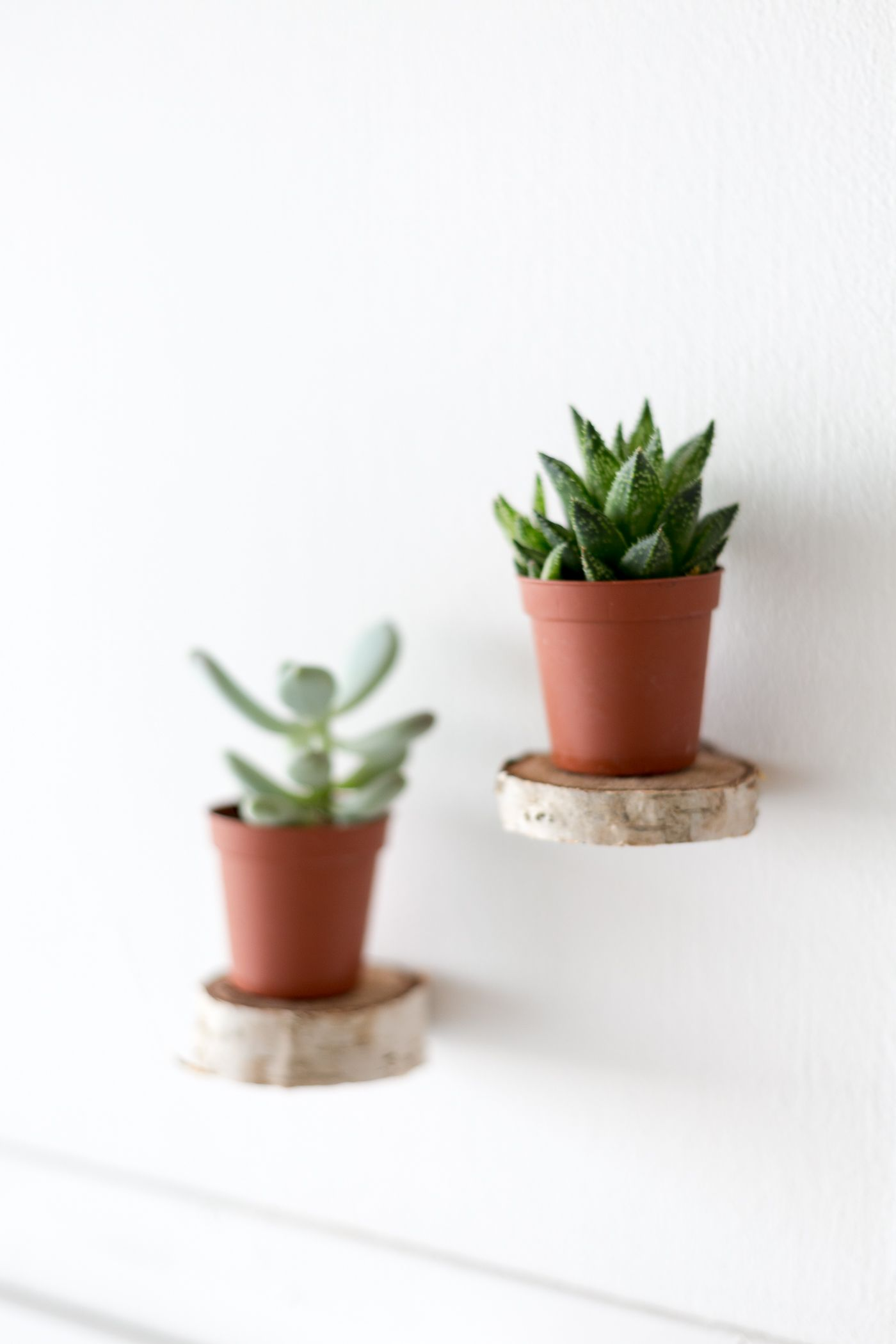 Make Floating Plant Shelves From A Birch Wood Round | For