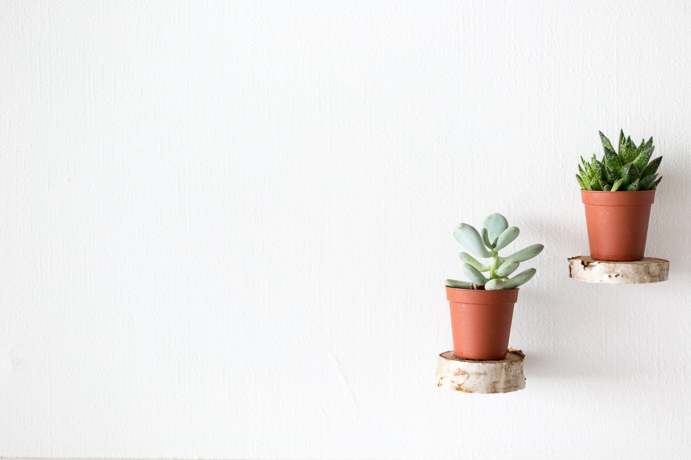 Make Floating Plant Shelves From A Birch Wood Round
